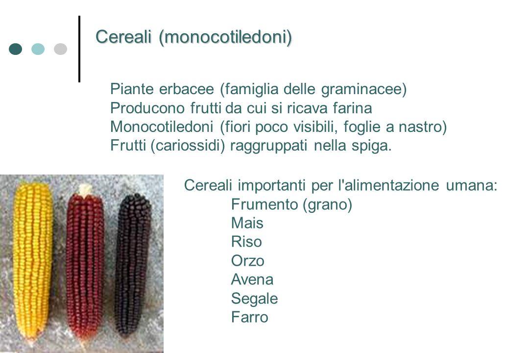 Piante erbacee (famiglia delle graminacee) Producono frutti da cui si ricava farina Monocotiledoni (fiori poco visibili, foglie a nastro) Frutti (cari