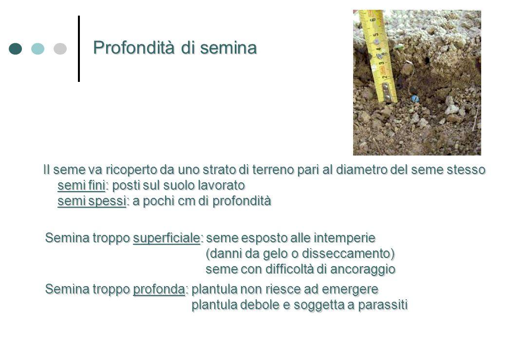 Il seme va ricoperto da uno strato di terreno pari al diametro del seme stesso semi fini: posti sul suolo lavorato semi fini: posti sul suolo lavorato