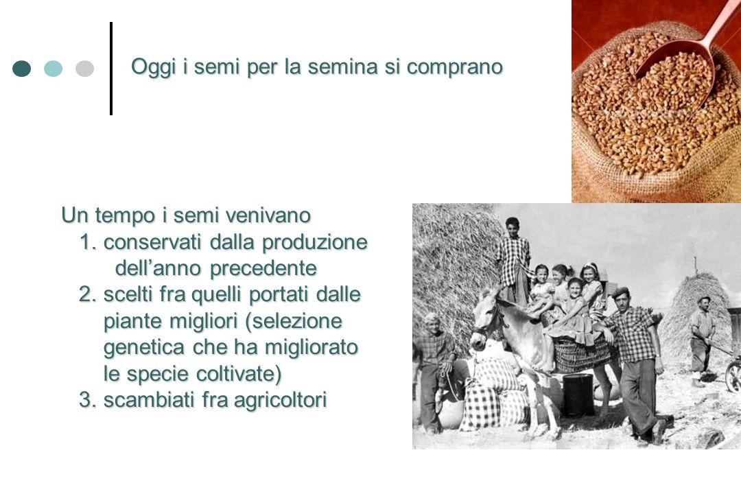 Oggi i semi per la semina si comprano Un tempo i semi venivano 1. conservati dalla produzione 1. conservati dalla produzione dellanno precedente della
