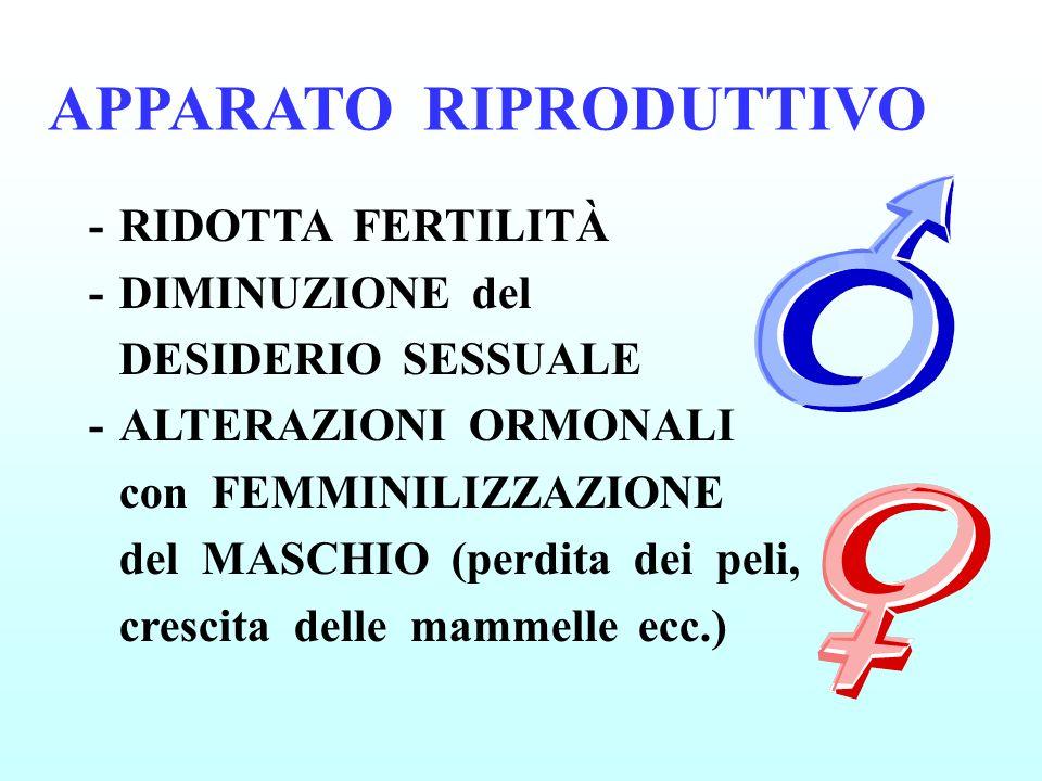 APPARATO RIPRODUTTIVO -RIDOTTA FERTILITÀ -DIMINUZIONE del DESIDERIO SESSUALE -ALTERAZIONI ORMONALI con FEMMINILIZZAZIONE del MASCHIO (perdita dei peli