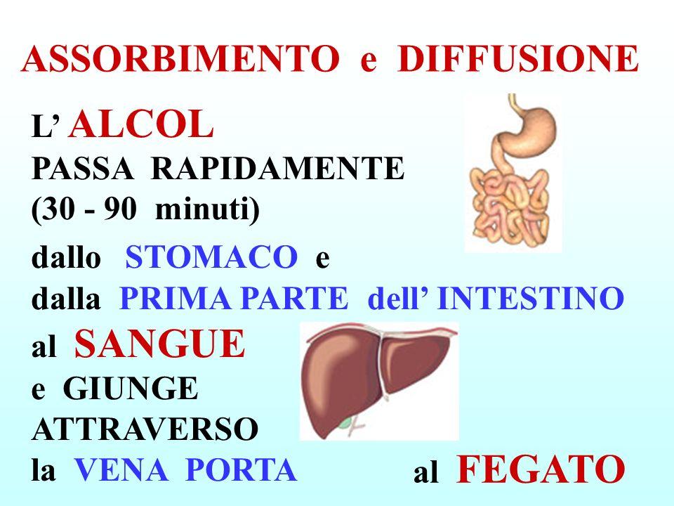 CUORE e CIRCOLAZIONE -INFARTO - IPERTENSIONE ARTERIOSA - MIOCARDIOPATIA ALCOLICA - CORONAROPATIA -ANEMIA con POCHI GLOBULI ROSSI MOLTO GROSSI per CARENZA di VITAMINA B12
