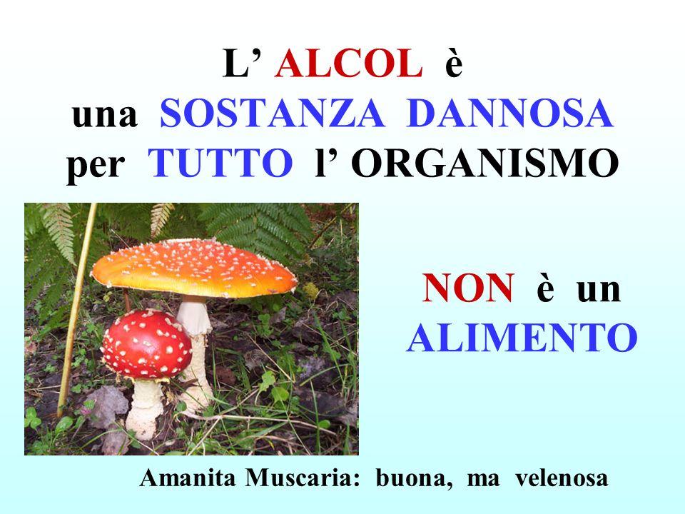 L ALCOL è una SOSTANZA DANNOSA per TUTTO l ORGANISMO NON è un ALIMENTO Amanita Muscaria: buona, ma velenosa
