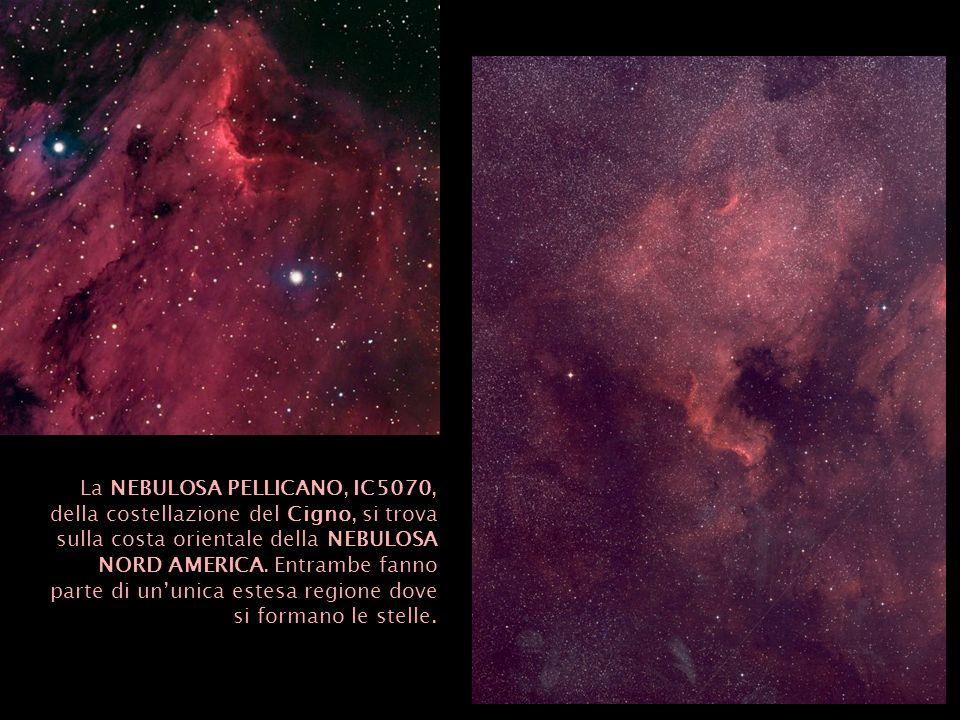 La NEBULOSA PELLICANO, IC5070, della costellazione del Cigno, si trova sulla costa orientale della NEBULOSA NORD AMERICA. Entrambe fanno parte di unun