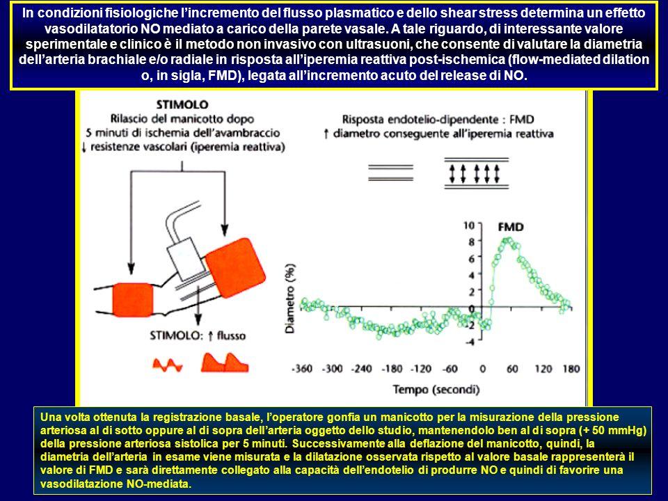 In condizioni fisiologiche lincremento del flusso plasmatico e dello shear stress determina un effetto vasodilatatorio NO mediato a carico della paret