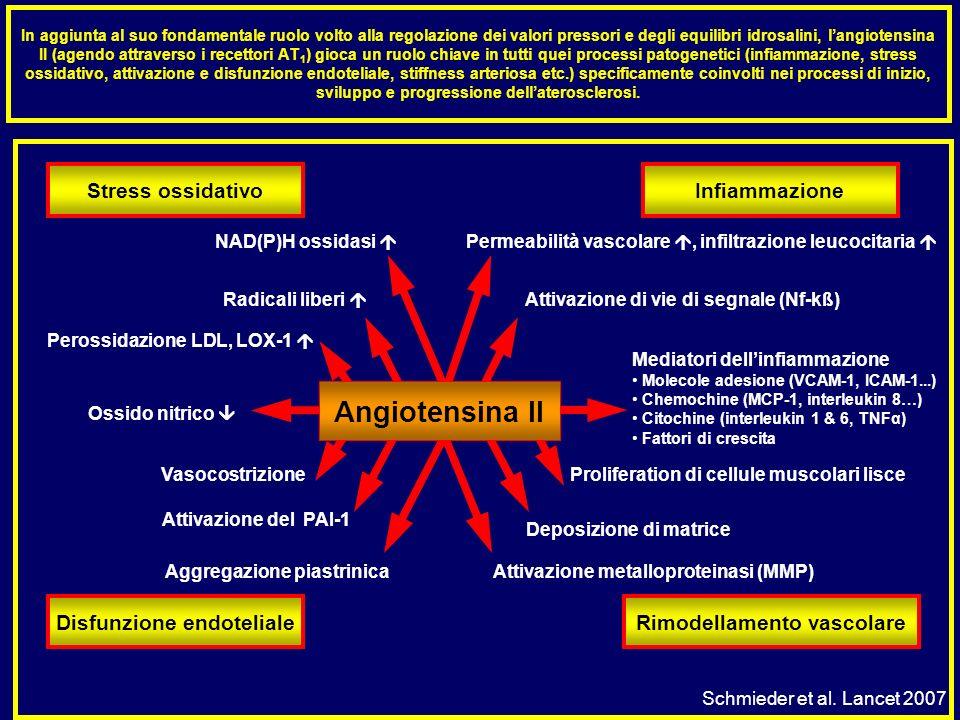 In aggiunta al suo fondamentale ruolo volto alla regolazione dei valori pressori e degli equilibri idrosalini, langiotensina II (agendo attraverso i r