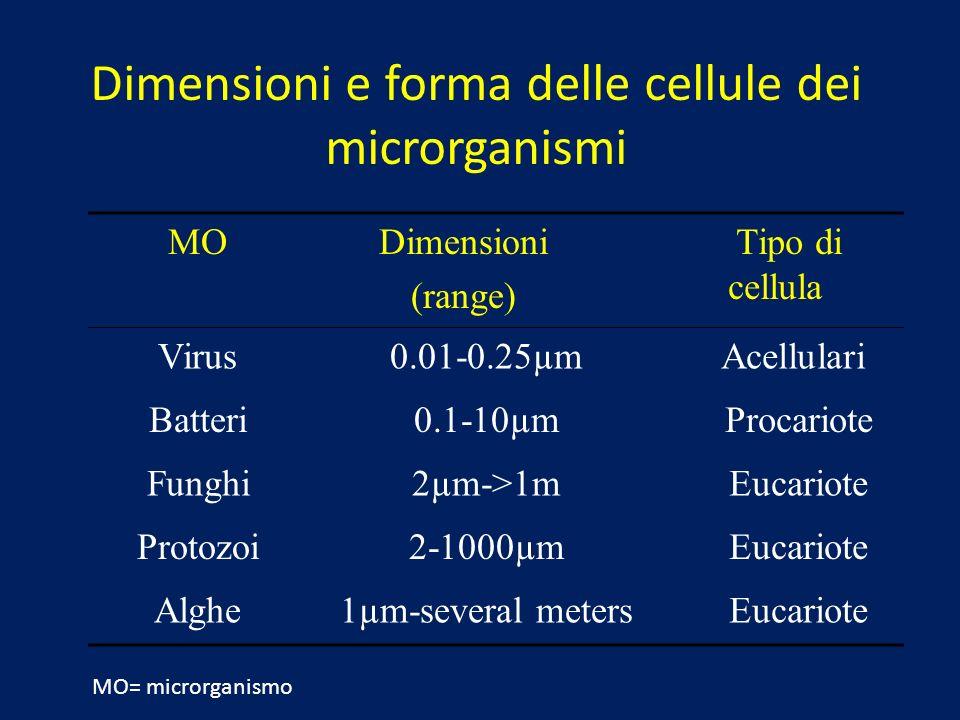MODimensioni (range) Tipo di cellula Virus 0.01-0.25µm Acellulari Batteri 0.1-10µm Procariote Funghi 2µm->1m Eucariote Protozoi 2-1000µm Eucariote Alg