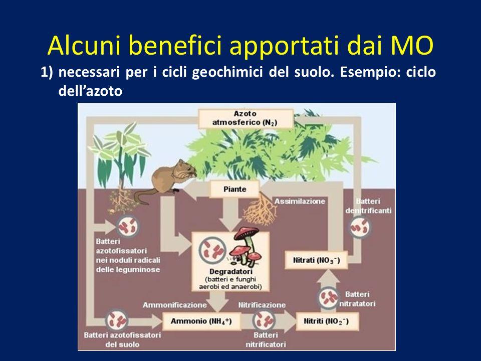 Alcuni benefici apportati dai MO 1) necessari per i cicli geochimici del suolo. Esempio: ciclo dellazoto