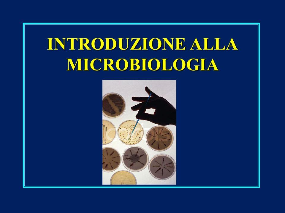 Il mondo dei microrganismi Organismi viventi Agenti infettivi (non viventi) Procarioti (unicellulari) eucariotivirusviroidiprioni EubatteriArchaeaAlgheFunghiProtozoi