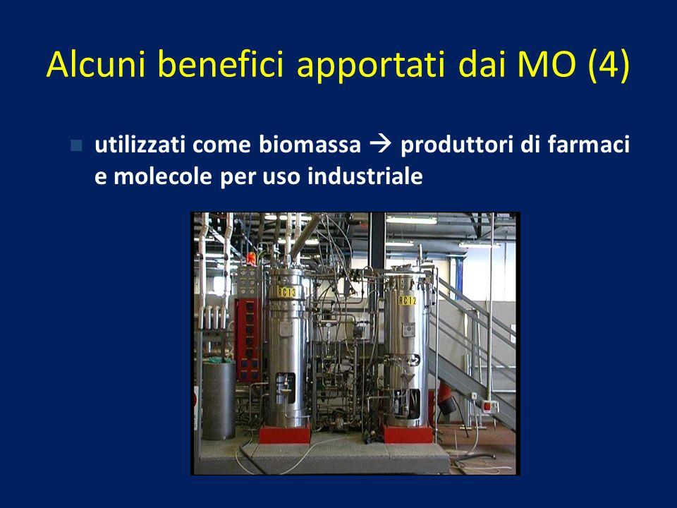 utilizzati come biomassa produttori di farmaci e molecole per uso industriale Alcuni benefici apportati dai MO (4)