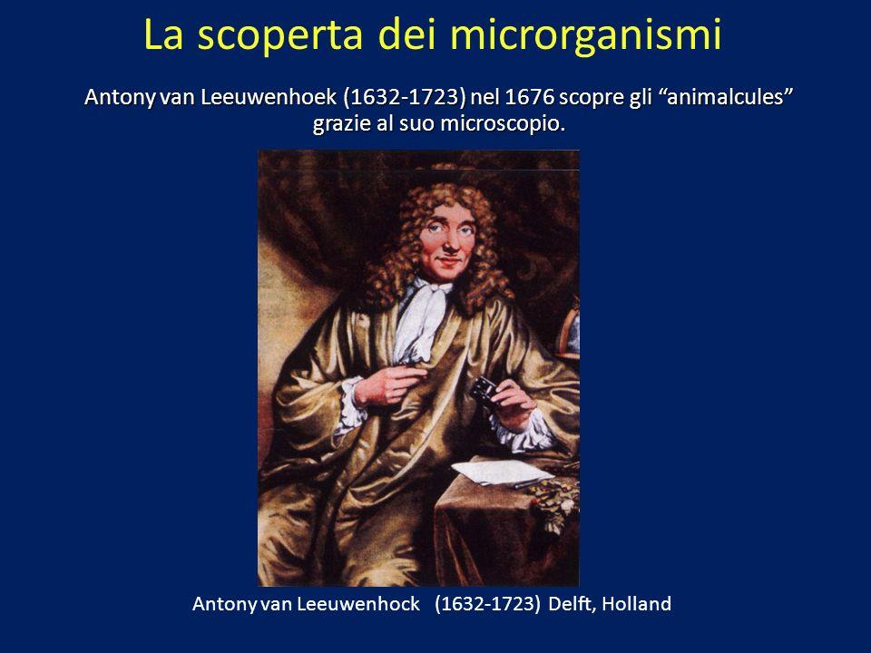 La scoperta dei microrganismi Antony van Leeuwenhoek (1632-1723) nel 1676 scopre gli animalcules grazie al suo microscopio. Antony van Leeuwenhock (16