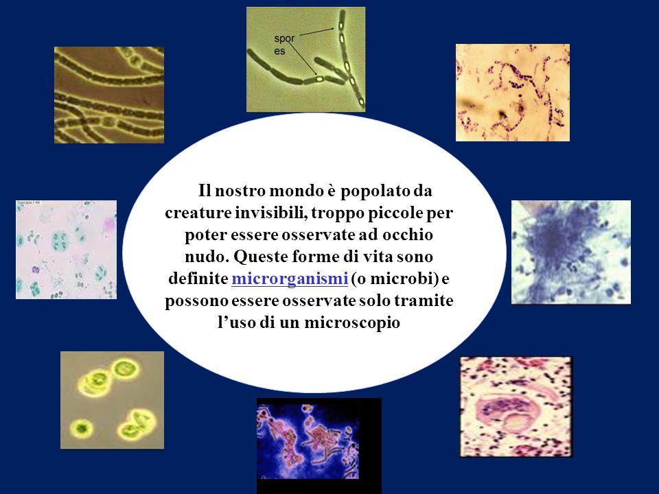 Microbiologia: DEFINIZIONE Microbiologia: scienza che studia i microrganismi e la loro attività Microrganismi: organismi che sono talmente piccoli da non poter essere osservati ad occhio nudo, ma solo tramite lutilizzo di un microscopio Questa disciplina studia la forma, la struttura, la riproduzione, la fisiologia, il metabolismo dei microrganismi, la loro distribuzione in natura, le relazioni tra loro e gli altri esseri viventi, gli effetti benefici e dannosi che hanno sugli esseri umani, le modificazioni fisiche e chimiche che provocano nel loro ambiente