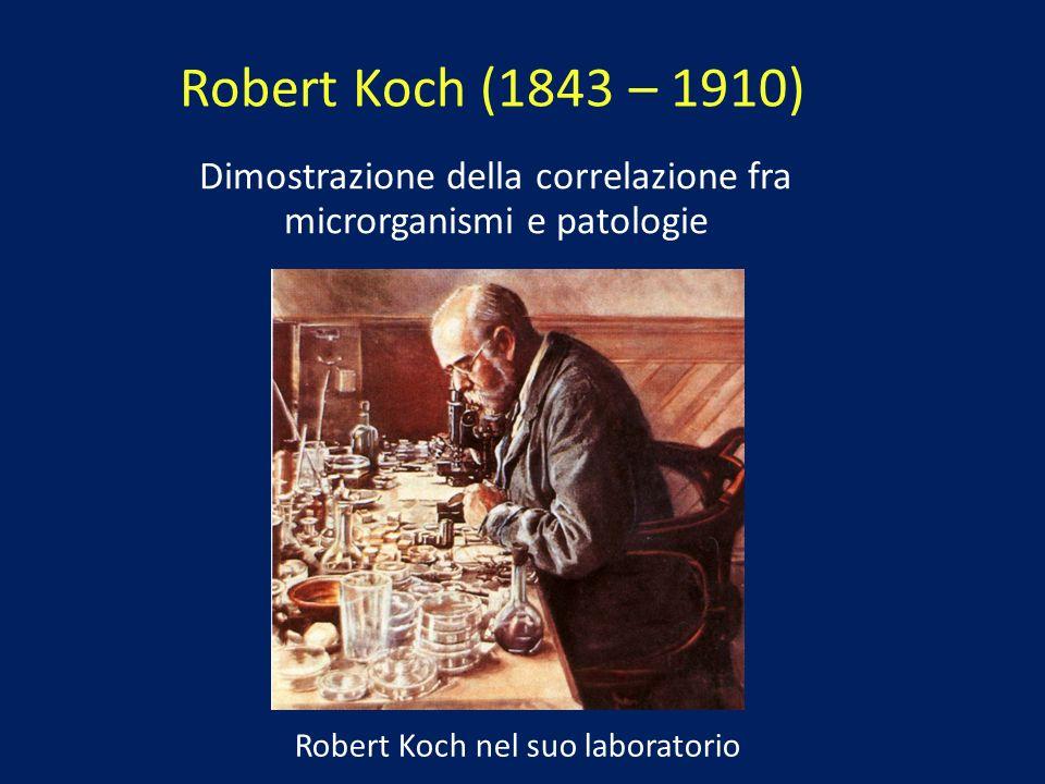 Robert Koch nel suo laboratorio Dimostrazione della correlazione fra microrganismi e patologie Robert Koch (1843 – 1910)