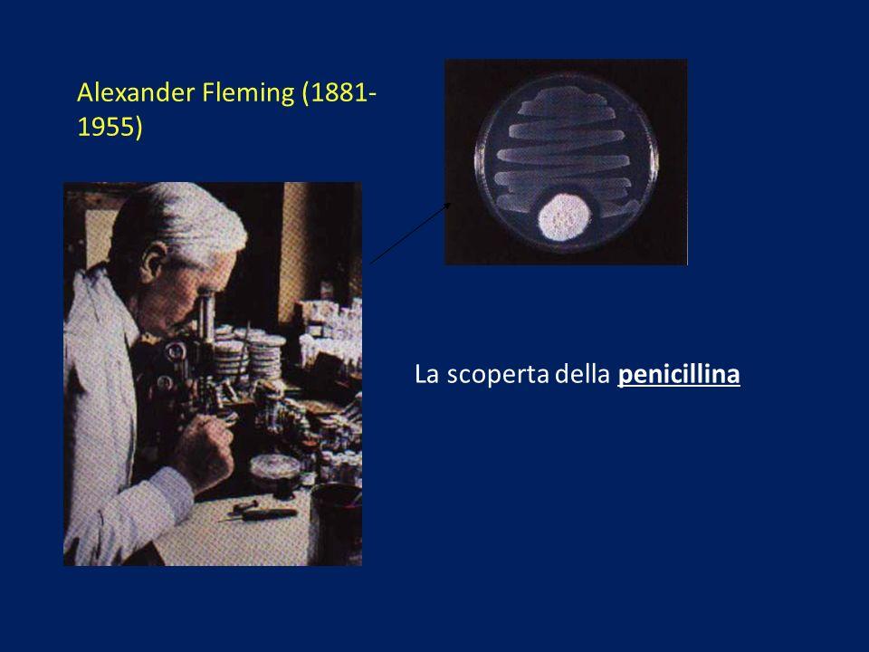 Alexander Fleming (1881- 1955) La scoperta della penicillina