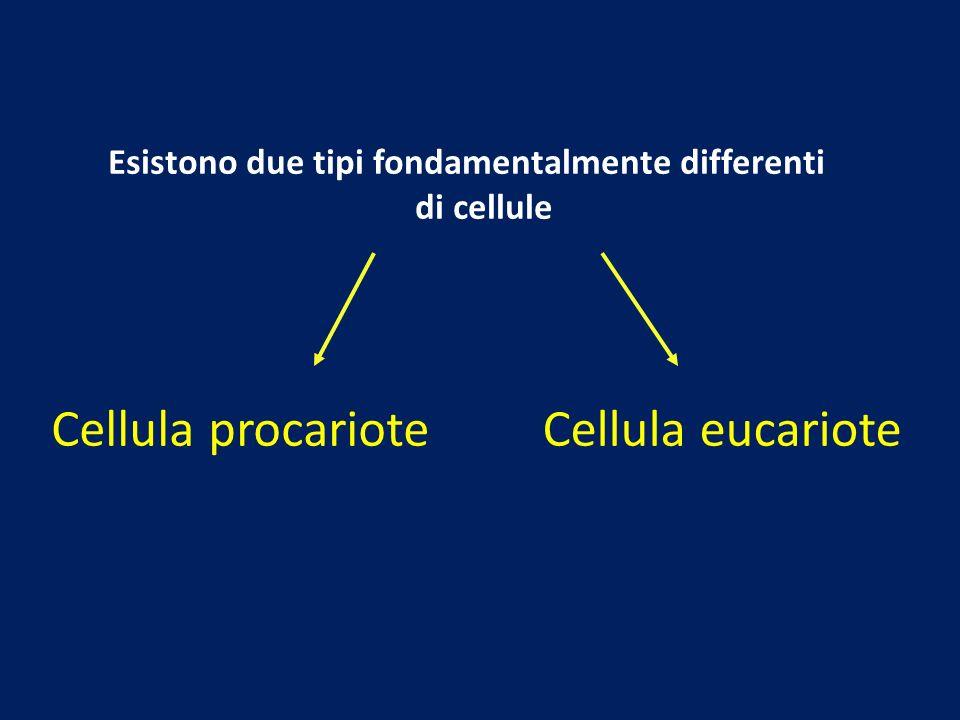 Esistono due tipi fondamentalmente differenti di cellule Cellula procarioteCellula eucariote