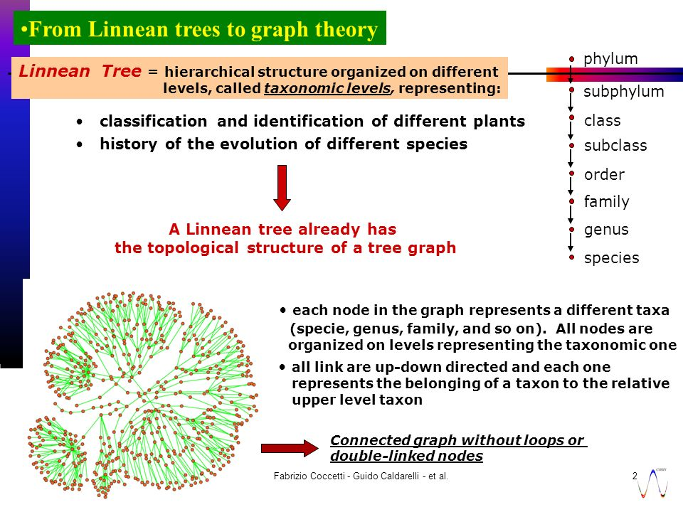 7 novembre 2003 Fabrizio Coccetti - Guido Caldarelli - et al.20 From Linnean trees to graph theory phylum subphylum class subclass order family genus species Linnean Tree = hierarchical structure organized on different levels, called taxonomic levels, representing: classification and identification of different plants history of the evolution of different species A Linnean tree already has the topological structure of a tree graph each node in the graph represents a different taxa (specie, genus, family, and so on).