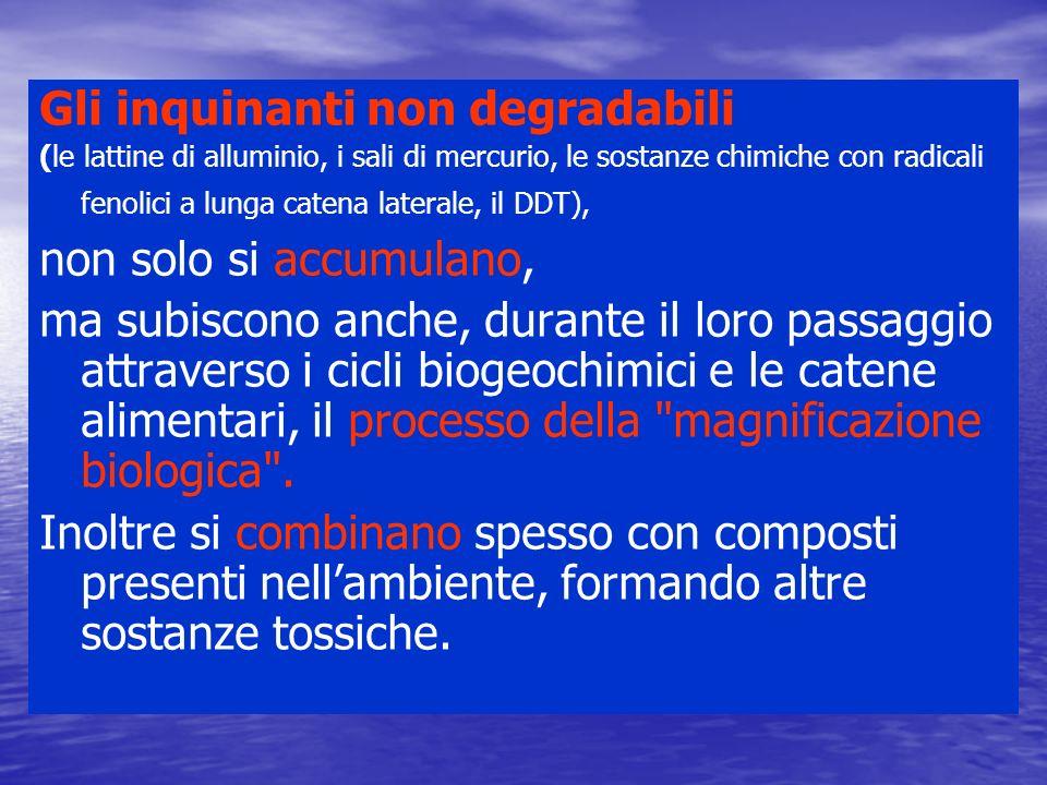 Gli inquinanti non degradabili (le lattine di alluminio, i sali di mercurio, le sostanze chimiche con radicali fenolici a lunga catena laterale, il DD