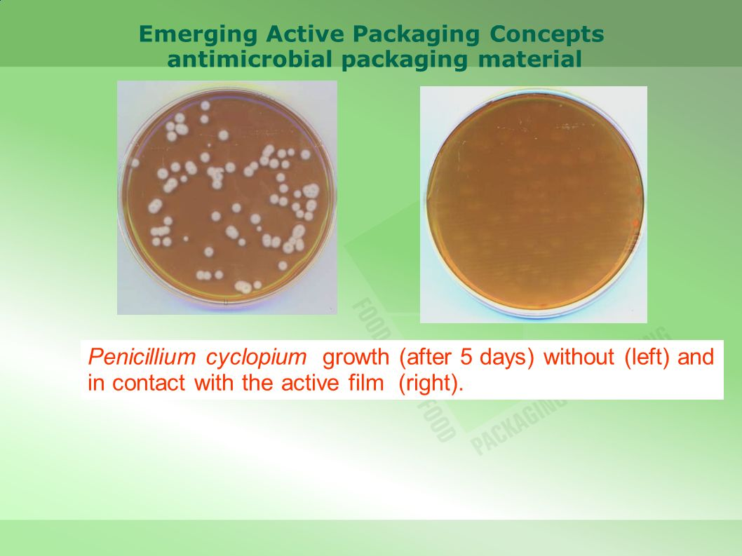 Penicillium cyclopium growth (after 5 days) without (left) and in contact with the active film (right). Emerging Active Packaging Concepts antimicrobi