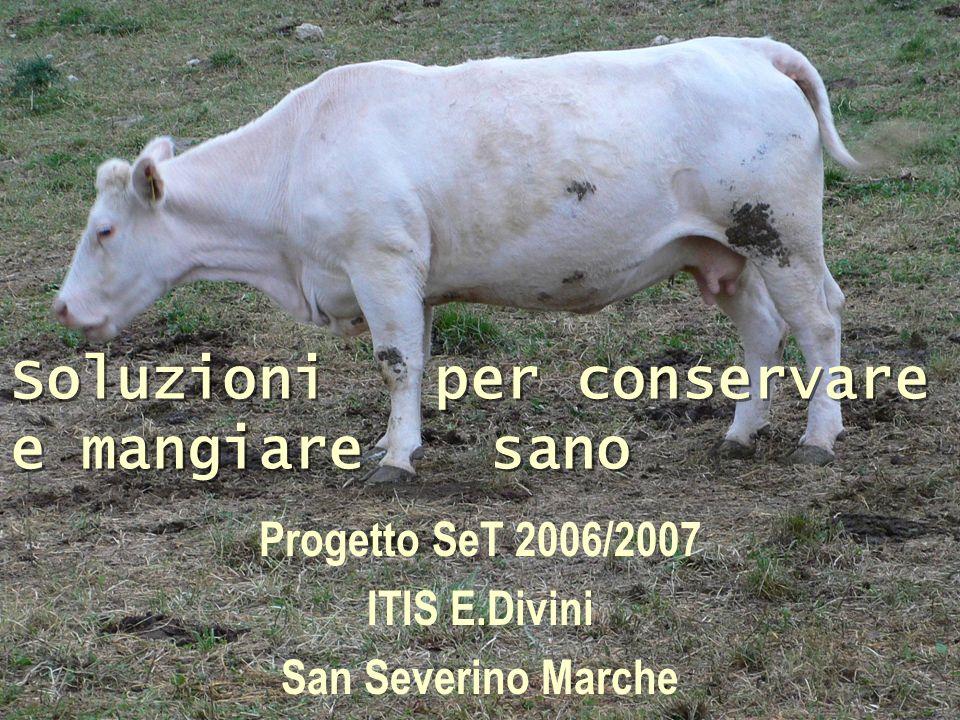 Progetto SeT 2006/2007 ITIS E.Divini San Severino Marche Soluzioni per conservare e mangiare sano