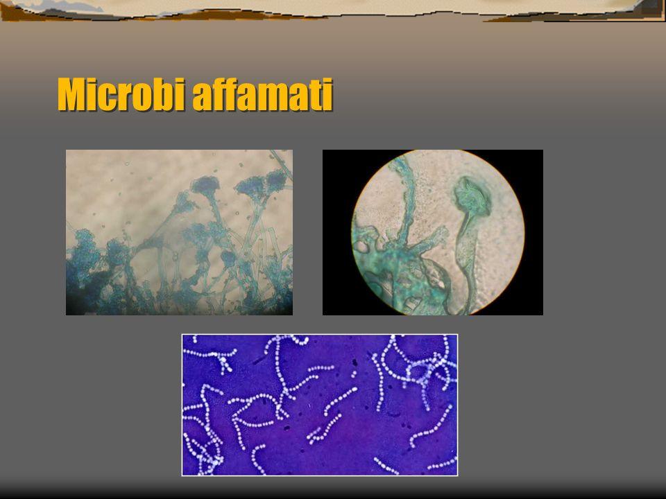 Microbi affamati