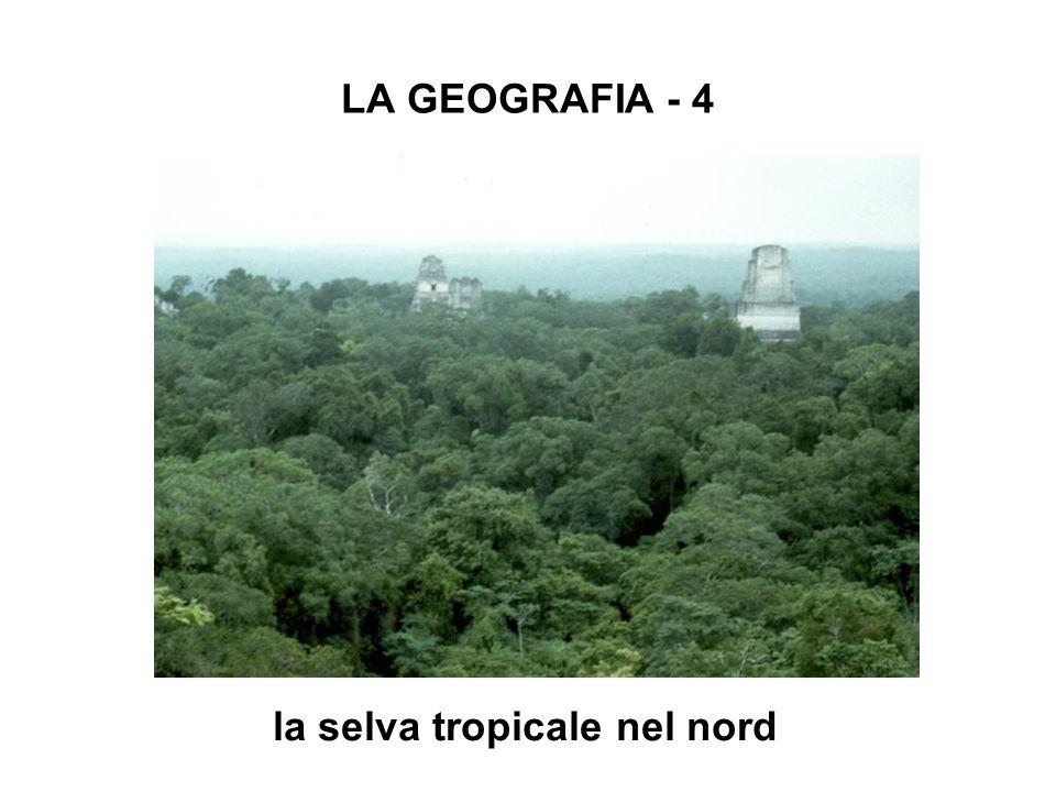 LA GEOGRAFIA - 4 la selva tropicale nel nord