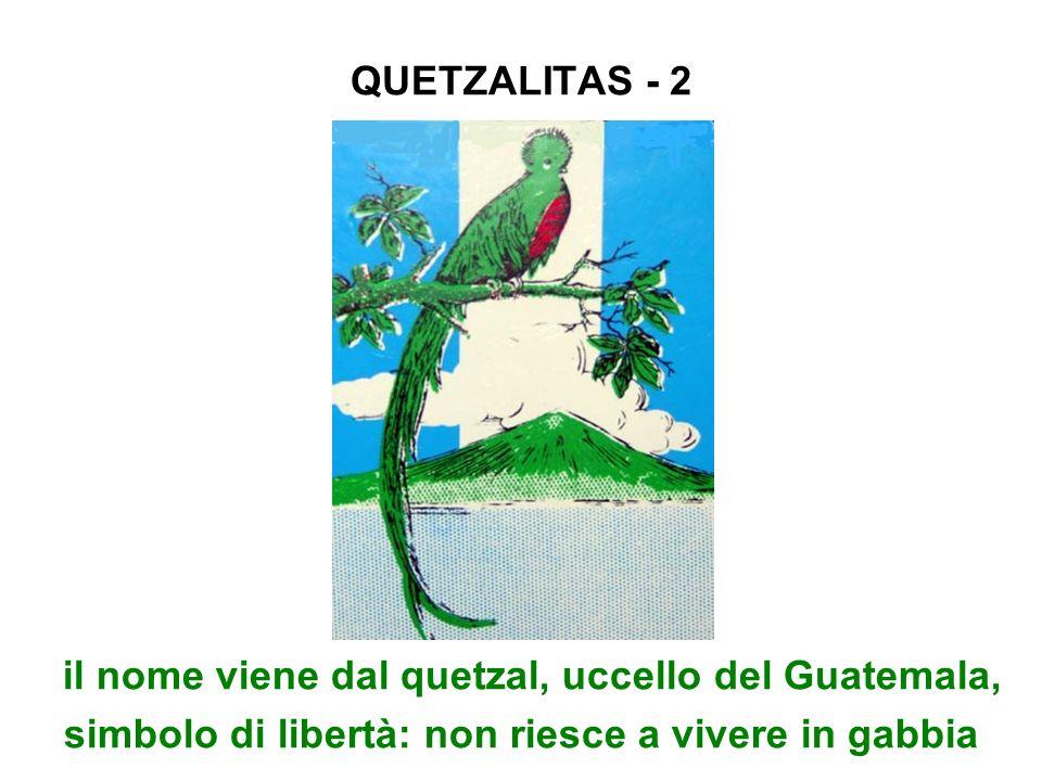 QUETZALITAS - 2 il nome viene dal quetzal, uccello del Guatemala, simbolo di libertà: non riesce a vivere in gabbia