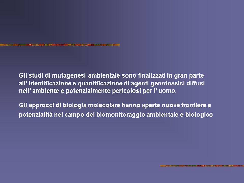 Gli studi di mutagenesi ambientale sono finalizzati in gran parte all identificazione e quantificazione di agenti genotossici diffusi nell ambiente e