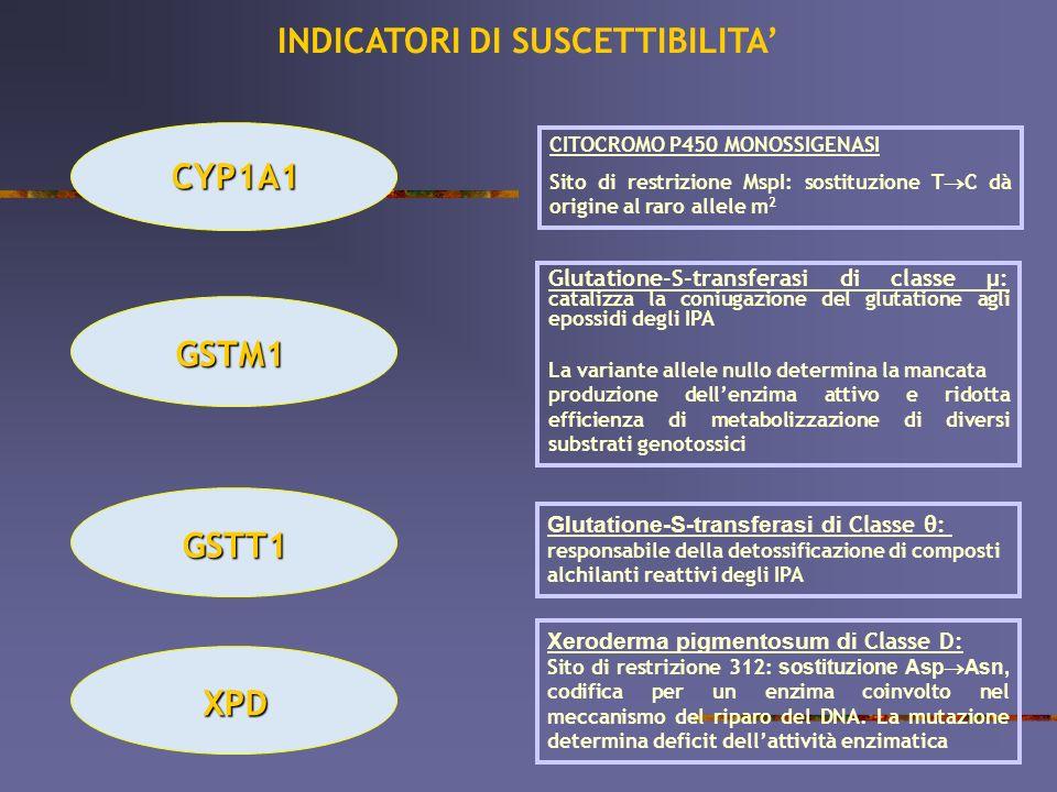 CYP1A1 CITOCROMO P450 MONOSSIGENASI Sito di restrizione MspI: sostituzione T C dà origine al raro allele m 2 GSTM1 Glutatione-S-transferasi di classe