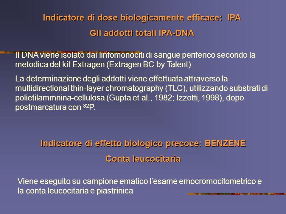 Indicatore di dose biologicamente efficace: IPA Gli addotti totali IPA-DNA Il DNA viene isolato dai linfomonociti di sangue periferico secondo la meto