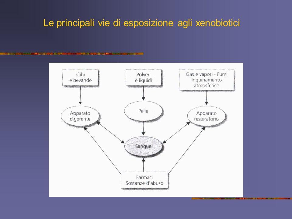 Le principali vie di esposizione agli xenobiotici