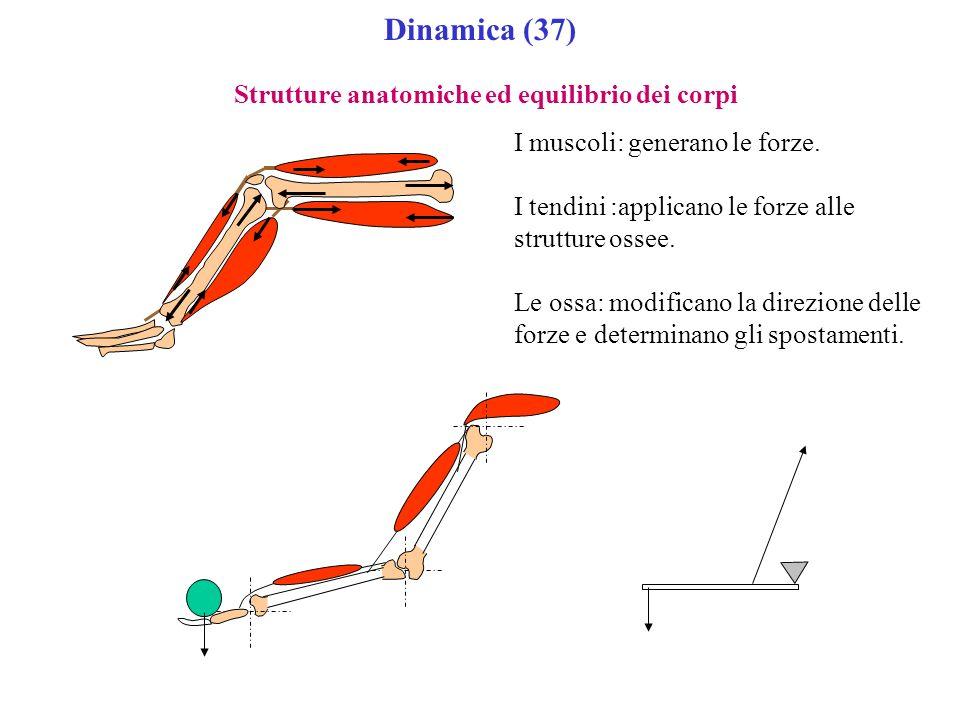 Dinamica (37) Strutture anatomiche ed equilibrio dei corpi I muscoli: generano le forze. I tendini :applicano le forze alle strutture ossee. Le ossa: