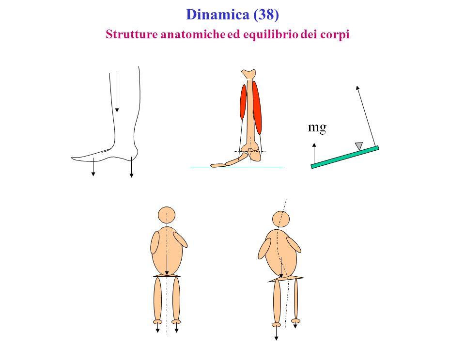 Dinamica (38) Strutture anatomiche ed equilibrio dei corpi