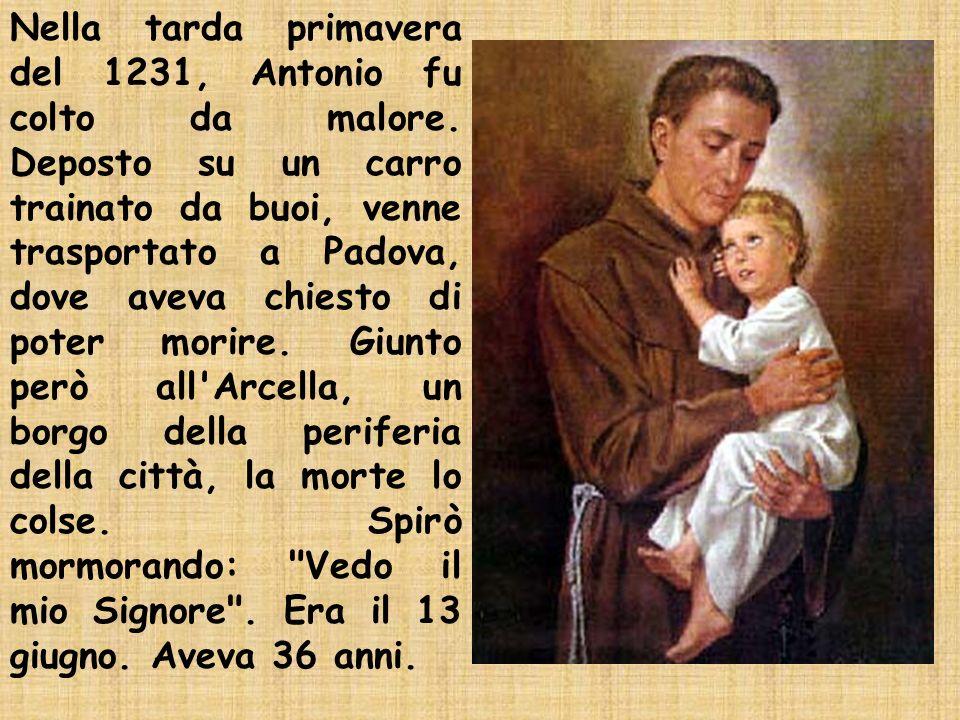 Nella tarda primavera del 1231, Antonio fu colto da malore. Deposto su un carro trainato da buoi, venne trasportato a Padova, dove aveva chiesto di po