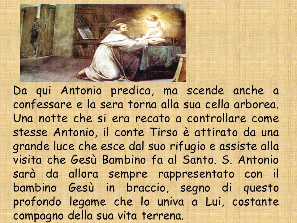 Da qui Antonio predica, ma scende anche a confessare e la sera torna alla sua cella arborea. Una notte che si era recato a controllare come stesse Ant