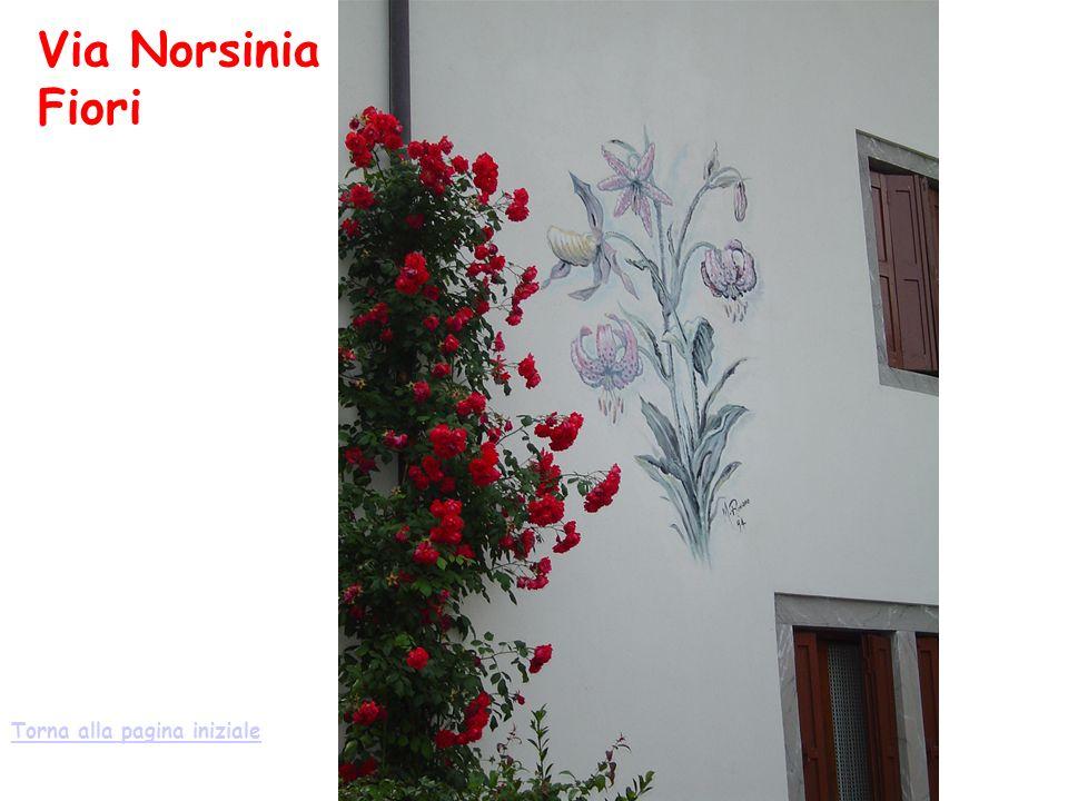 Via Norsinia Fiori Torna alla pagina iniziale