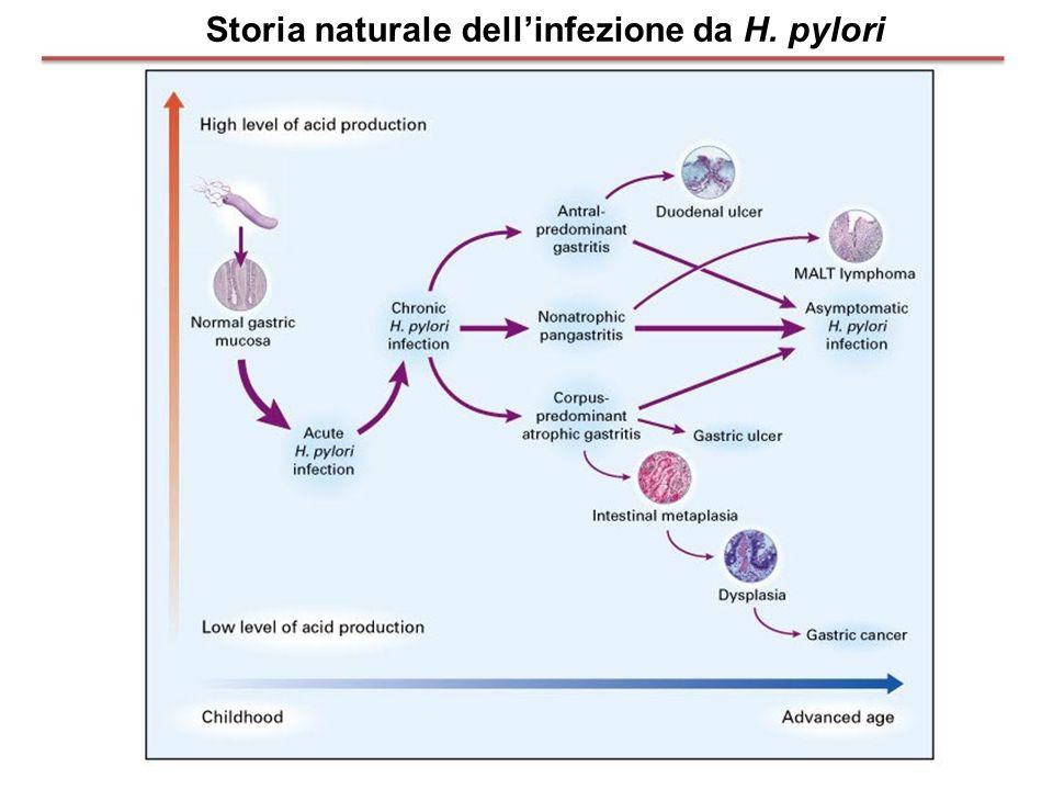 Storia naturale dellinfezione da H. pylori