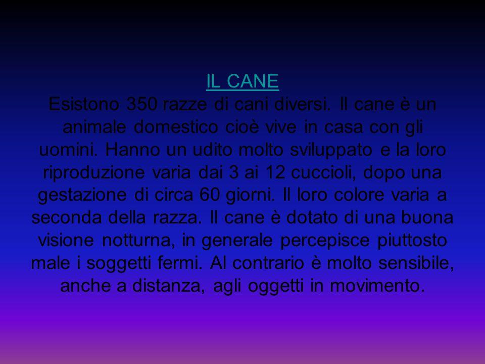 IL CANE IL CANE Esistono 350 razze di cani diversi. Il cane è un animale domestico cioè vive in casa con gli uomini. Hanno un udito molto sviluppato e