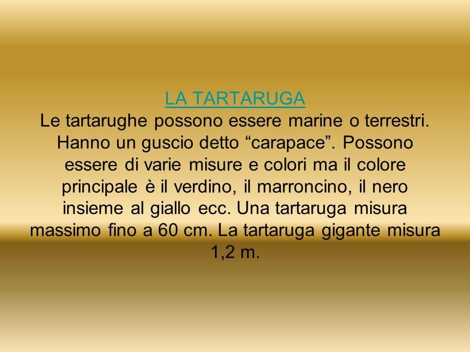 LA TARTARUGA LA TARTARUGA Le tartarughe possono essere marine o terrestri. Hanno un guscio detto carapace. Possono essere di varie misure e colori ma