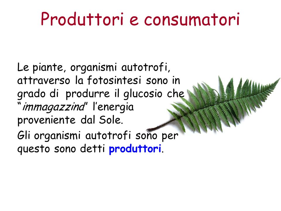 Produttori e consumatori Le piante, organismi autotrofi, attraverso la fotosintesi sono in grado di produrre il glucosio cheimmagazzina lenergia proveniente dal Sole.