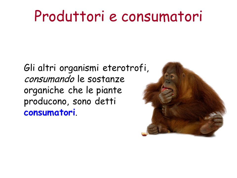 Produttori e consumatori Gli altri organismi eterotrofi, consumando le sostanze organiche che le piante producono, sono detti consumatori.