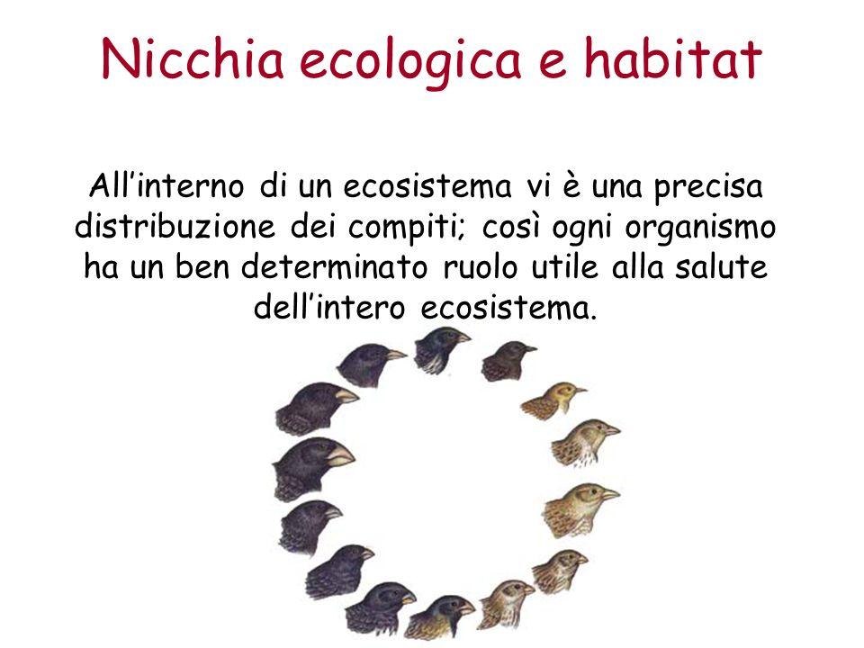 Nicchia ecologica e habitat Allinterno di un ecosistema vi è una precisa distribuzione dei compiti; così ogni organismo ha un ben determinato ruolo utile alla salute dellintero ecosistema.