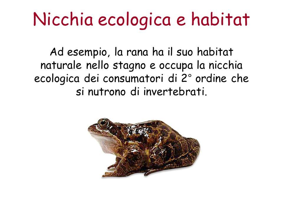 Nicchia ecologica e habitat Ad esempio, la rana ha il suo habitat naturale nello stagno e occupa la nicchia ecologica dei consumatori di 2° ordine che si nutrono di invertebrati.