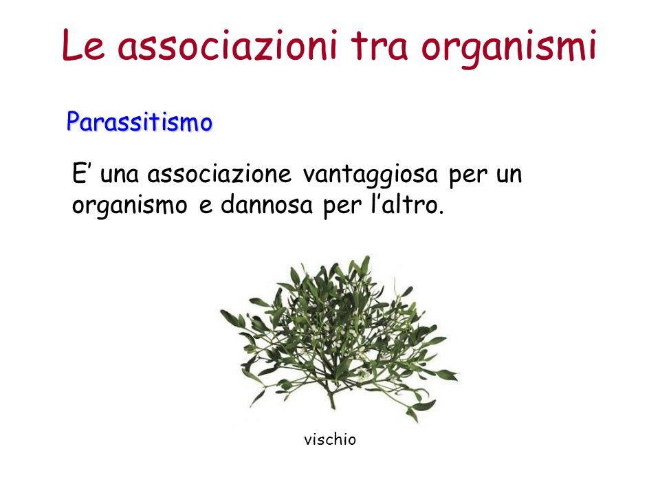 Le associazioni tra organismiParassitismo E una associazione vantaggiosa per un organismo e dannosa per laltro.