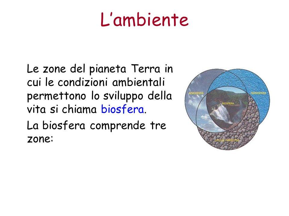 Lambiente Litosfera: la superficie terrestre e il sottosuolo fino a poche decine di metri di profondità.