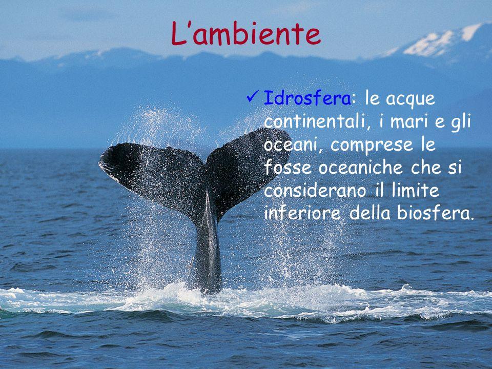 Lambiente Idrosfera: le acque continentali, i mari e gli oceani, comprese le fosse oceaniche che si considerano il limite inferiore della biosfera.