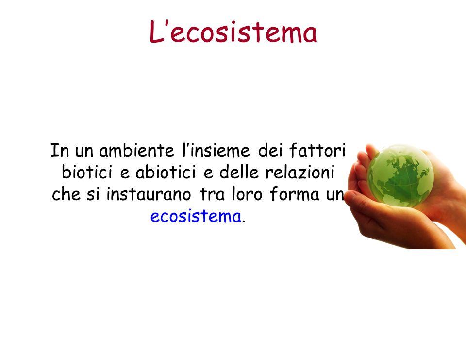 Lecosistema In un ambiente linsieme dei fattori biotici e abiotici e delle relazioni che si instaurano tra loro forma un ecosistema.