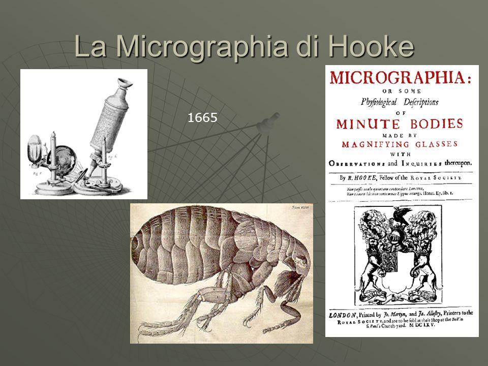 Lanatomia microscopica di Malpighi La fisiologia comparata: lanatome plantarum del 1675 La fisiologia comparata: lanatome plantarum del 1675 La scoperta dei capillari.
