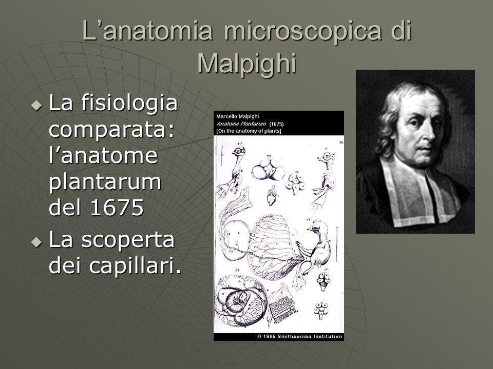 Lanatomia microscopica di Malpighi La fisiologia comparata: lanatome plantarum del 1675 La fisiologia comparata: lanatome plantarum del 1675 La scoper