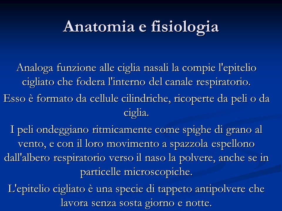 Anatomia e fisiologia Analoga funzione alle ciglia nasali la compie l'epitelio cigliato che fodera l'interno del canale respiratorio. Esso è formato d