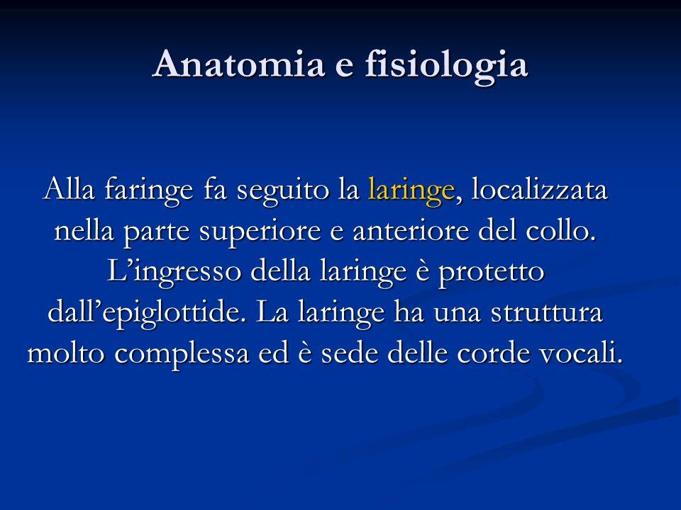 Anatomia e fisiologia Alla faringe fa seguito la laringe, localizzata nella parte superiore e anteriore del collo. Lingresso della laringe è protetto
