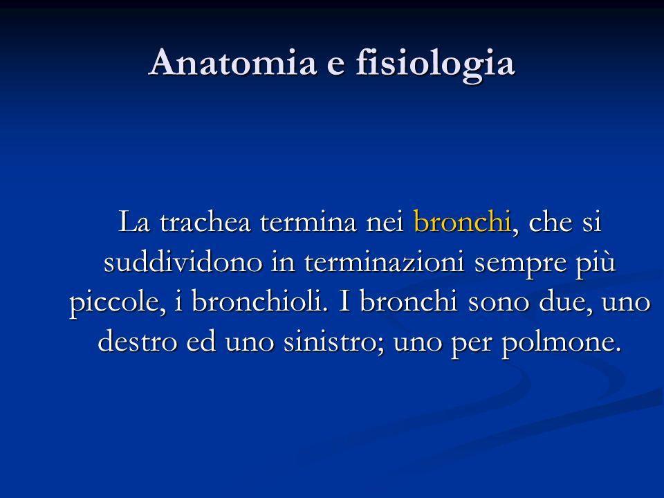 Anatomia e fisiologia La trachea termina nei bronchi, che si suddividono in terminazioni sempre più piccole, i bronchioli. I bronchi sono due, uno des